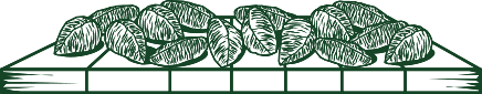 5. Secagem das castanhas